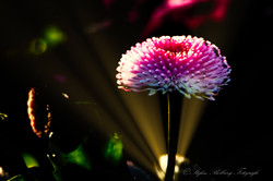 Botanischer Garten-7