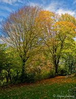 Bielefeld im Herbst (8 von 31).jpg