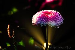 Botanischer Garten-6