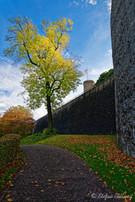 Bielefeld im Herbst (11 von 31).jpg