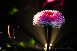 Botanischer Garten-10