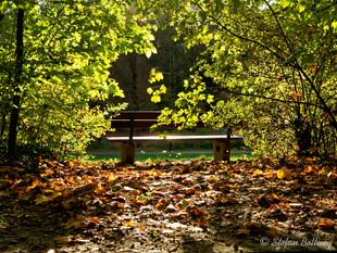 Bielefeld im Herbst (28 von 31).jpg