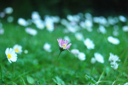 Minalism Photography UK