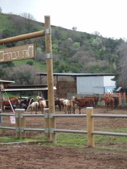 צימרים למשפחות בצפון - אטרקציית סוסים
