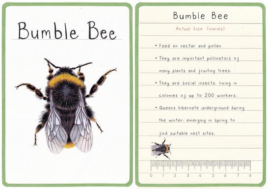 Bumble Bee Flashcard