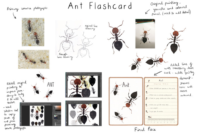 Ant Flashcard Development