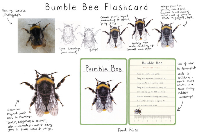 Bumble Bee Flashcard Development