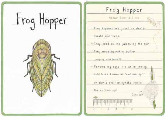 Frog Hopper Flashcard