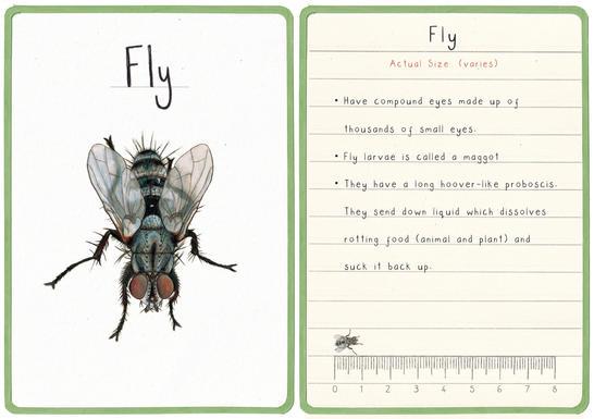 Fly Flashcard