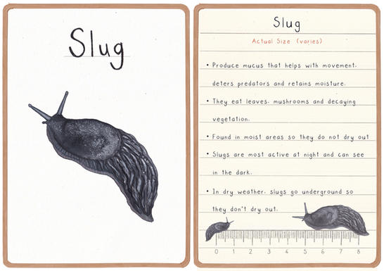 Slug Flashcard