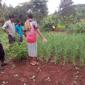 From Subsistence to Model Farmer