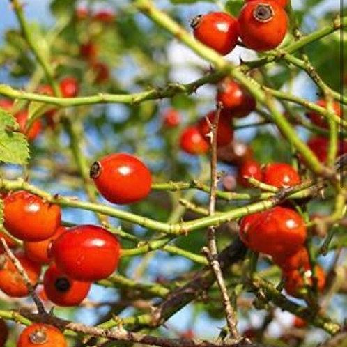 Organic Rosehip Oil 30ml