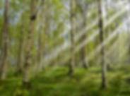 forest-2165356_1920.jpg