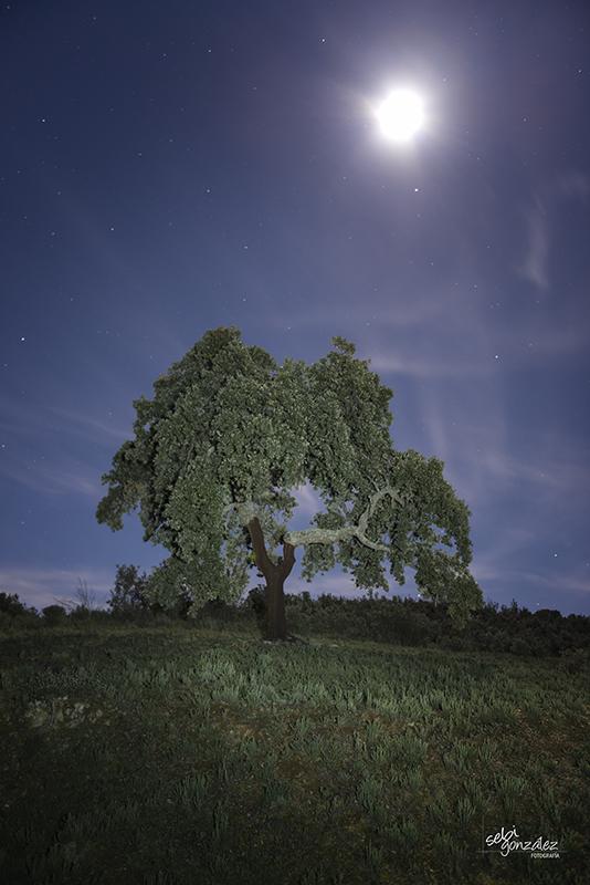 Encina de luna