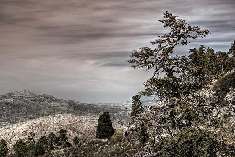 Cañada del Cuerno