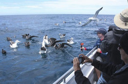 Albatross_People_43_grande