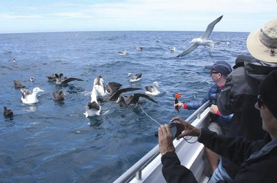 Albatross_People_43_grande.jpg