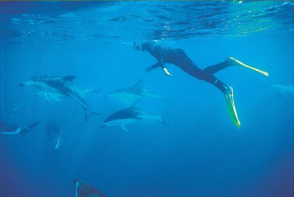 Dolphin_Swimmer_3453d19a-6d3b-4849-bbc3-1e970c88c34c_grande
