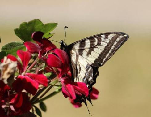 butterflyOutSideDoor2.jpg