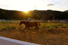 RV_RanchoOso_Horse2.jpg