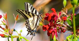 butterflyredflower.jpg