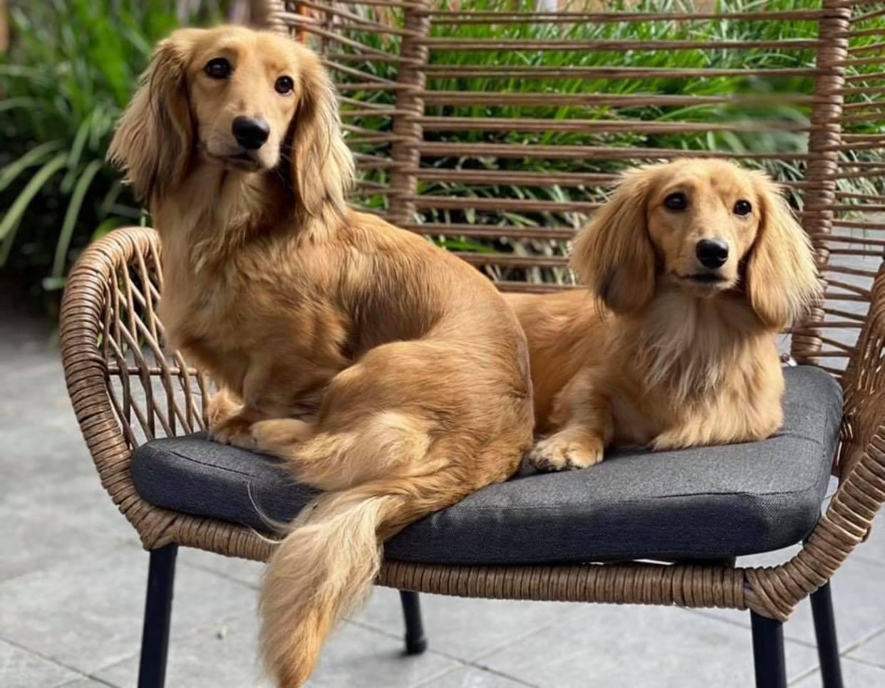 Maddy & Stella