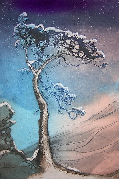 pine in snow I