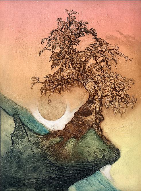 wild mulberry bonsai