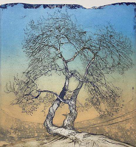 judas tree II