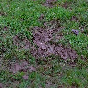 Welton Rovers 0 v 1 Hengrove