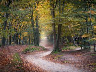 Herfstboswandeling zaterdag 2 en zondag 3 oktober 2021