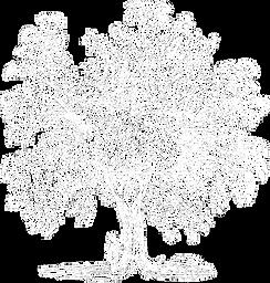 UTB_tree_white.png