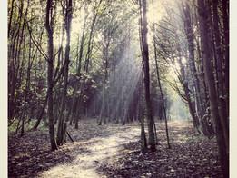Geneva Wood