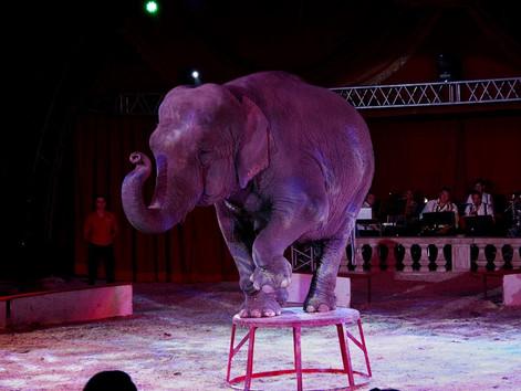 [WYBIERAM TRADYCJĘ] Z wizytą w cyrku Floriana Richtera - klasyka cyrku w świeżym wydaniu