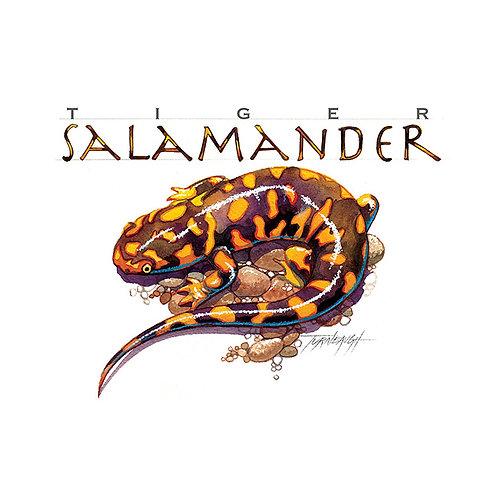 TIGER SALAMANDER