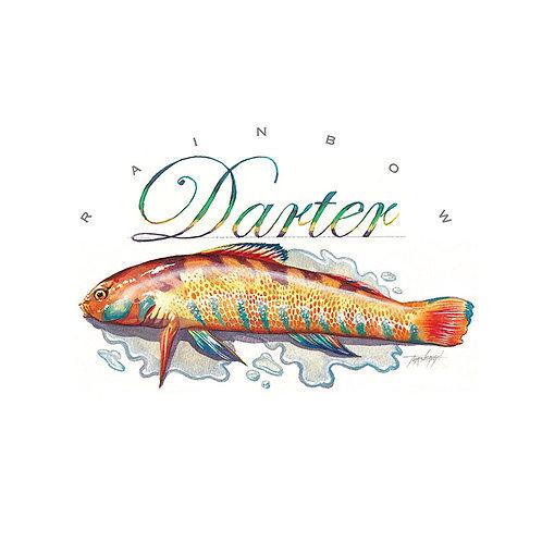 DARTER