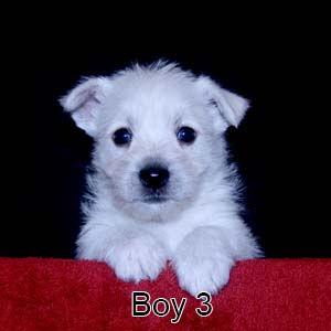 6-9-20 Noel Boy 3.JPG