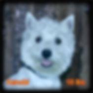 Kenobi Portrait Web.jpg