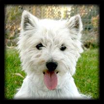 10-24-12 Casper A Web.jpg
