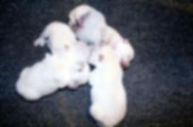 2-9-19 Leia Pups.JPG