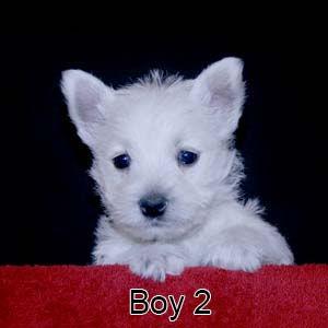 4-21-20 Lace Boy 2.JPG