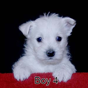 9-19-20 Tabitha Boy 4.JPG