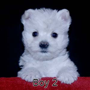3-23-21 Tabitha Boy 2.JPG
