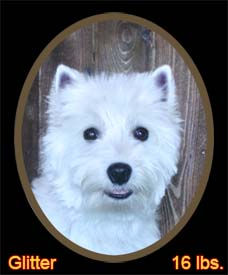 Glitter Portrait Web.jpg