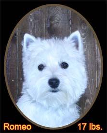 Romeo Portrait Web.jpg