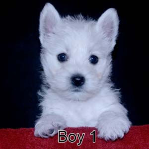 9-23-21 Tabitha Boy 1.JPG