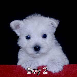 9-8-21 Tinsel Boy 2.JPG