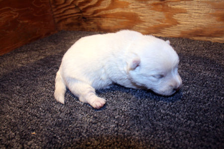 10-15-19 Soraya Pup.JPG
