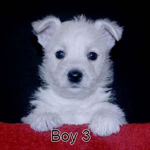 6-9-20 Chantilly Boy 3.JPG