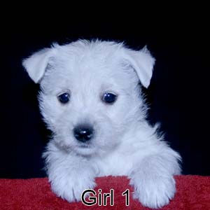 12-29-20 Chantilly Girl 1.JPG